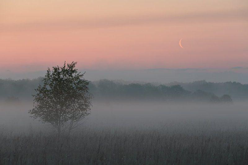 В предрассветном тумане.photo preview