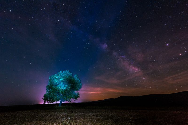 milky way, nightscape, tree, sky, stars, field Maybe we are not alone...photo preview