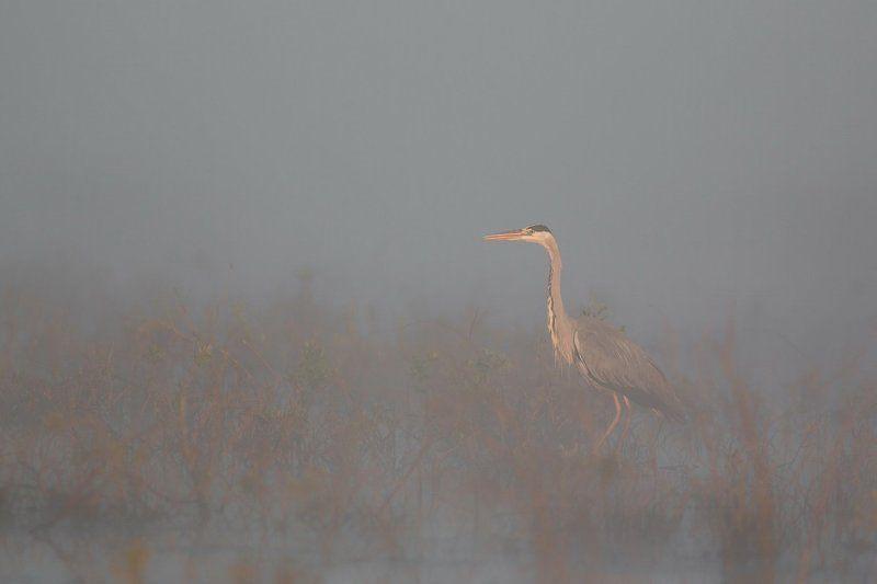 Туманная.photo preview