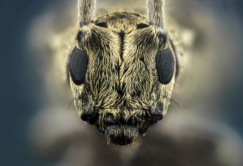macro wild insect nikon Extreme Macrophoto preview