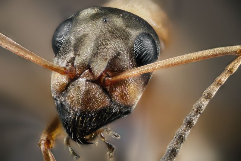 ant macro wild insect small micro nikon Муравейphoto preview