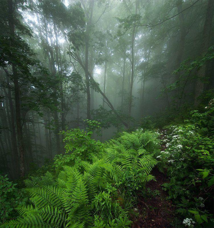 Карпаты, Лес, Туман Свежесть июньского лесаphoto preview