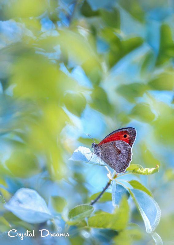 butterfly, color, crystal deams, nature photo preview