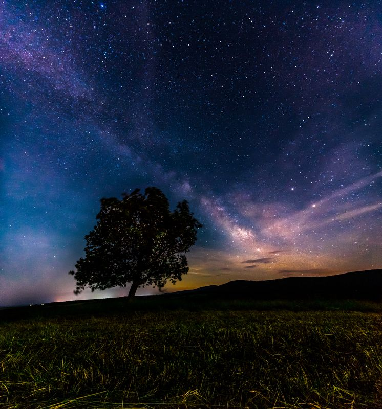 milky way, star, sky, tree, field, nightscape, night Like a giant falling star...photo preview