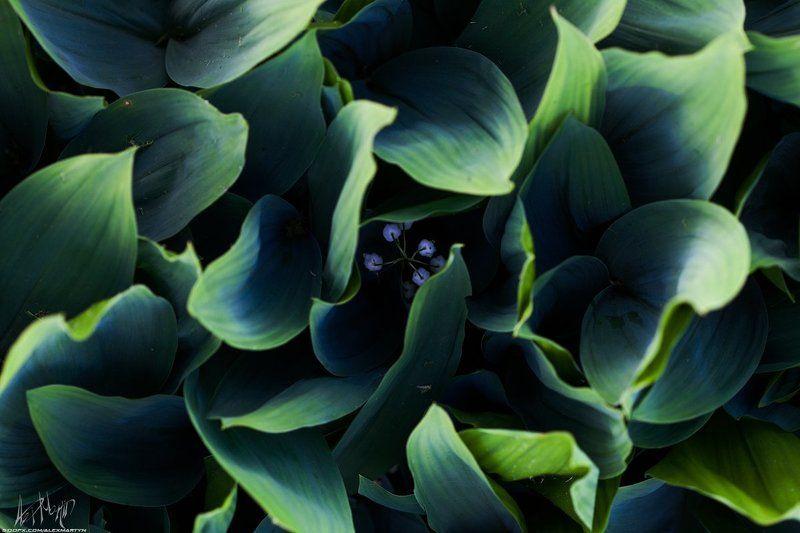Дача, Лето, Цветы Летняя подборка цветовphoto preview