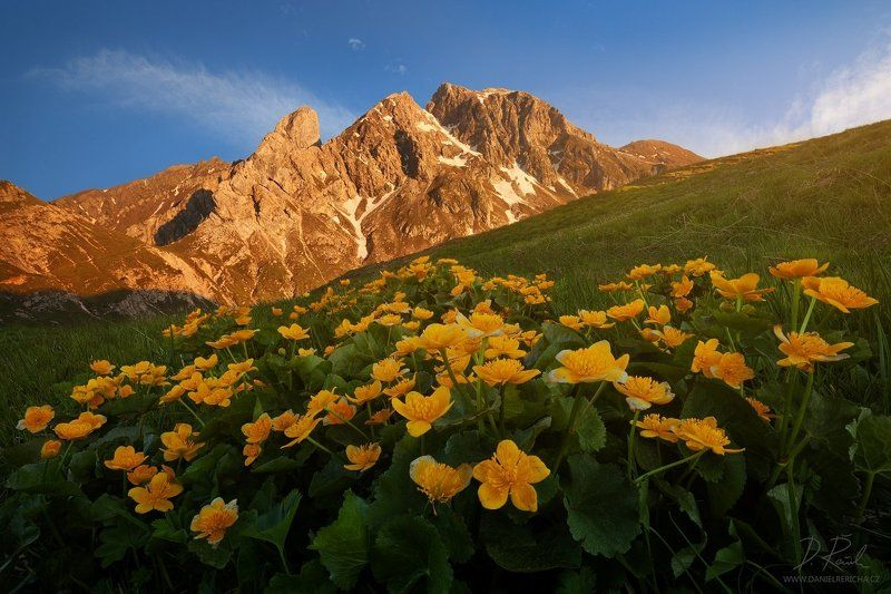 Alps, Dolomites, Italy, South Tyrol, Tyrol, Belluno, Alto Adige,  Passo Giau, Giau, Passo, Trentino, europe, travel, summer,  summer landscape, daniel rericha, evening colors, evening, evening light, mountains, mountain, flowers, peaks, sky, clouds, sunse Blooming Dolomitesphoto preview
