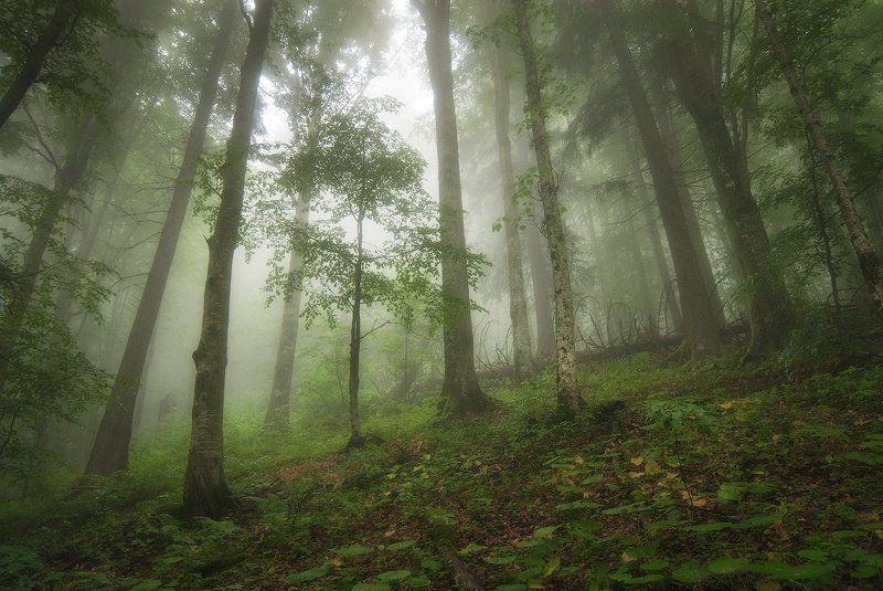 Карпаты, Лес, Молодой, Туман Молодойphoto preview