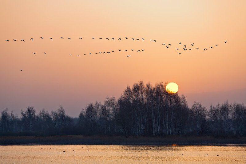 Апрельское утро.photo preview