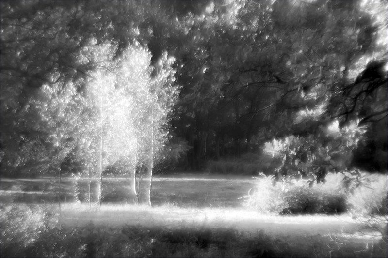 природа, берёзки, монокль Три девчонки-хохотушки - Три берёзки на опушке..photo preview