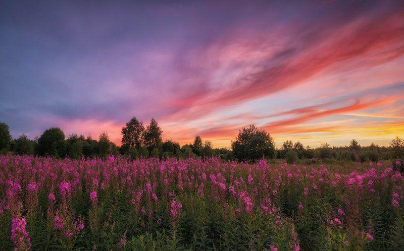 Ярославская область Где-то посредине лета...photo preview
