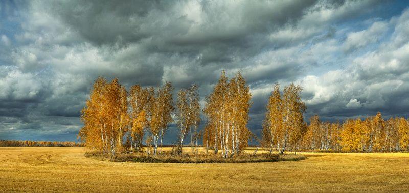 Осень,березы Зауральеphoto preview