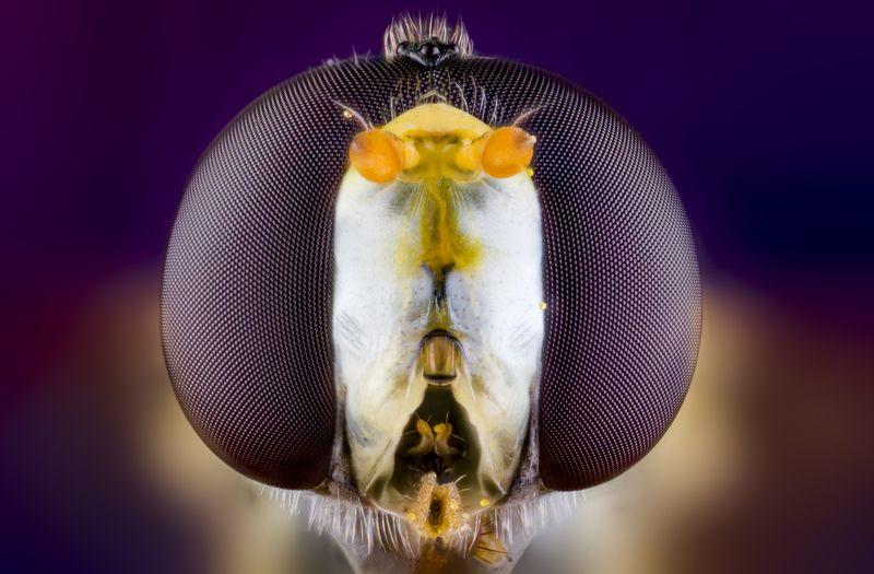 macro wild insect большие глаза маленького мираphoto preview