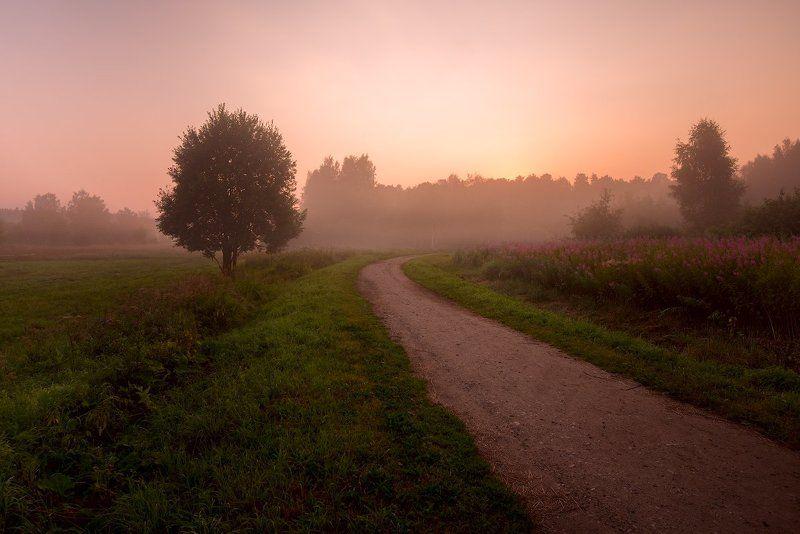 По дороге к солнцу.photo preview