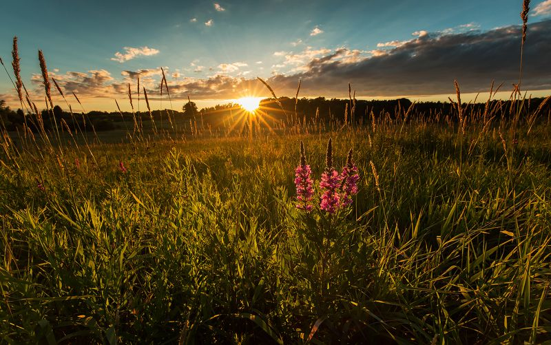 feild, flowers, sun, sunset, закат,, поле,, солнце,, цветы Last raysphoto preview