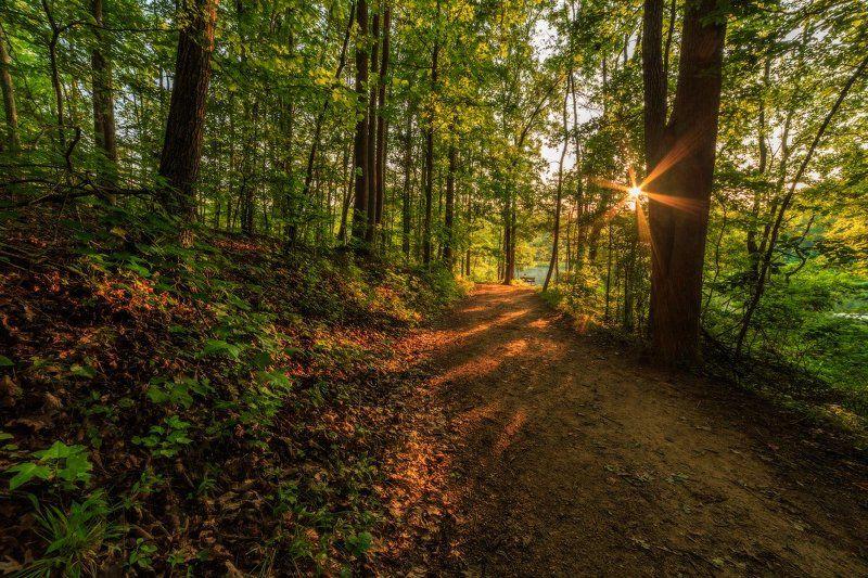 По лесным тропинкамphoto preview