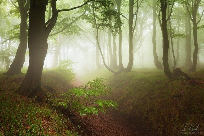 Czech republic, Ore mountains, North Bohemia, Bohemia, Tschechische republik, Erzgebirge, Europe, travel, nature, landscape, mist, fog, summer, summer forest, forest, rain, wet, rainy forest, rainy day, mountains, fine art, foggy, foggy forest, summer col Rainy forestphoto preview