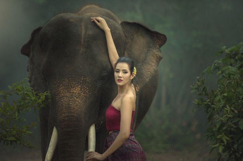 portrait,elephat,asia,cambodia,thai,wildlife, Lady with elephantphoto preview