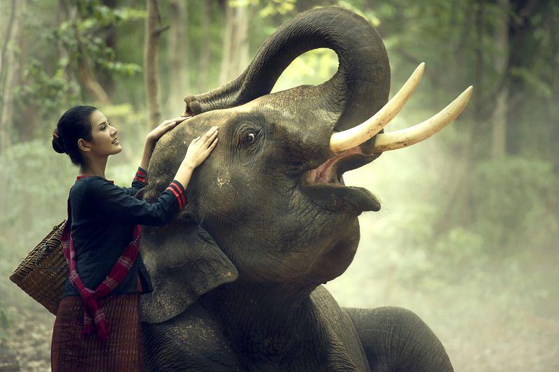 elelphant,portrait,woman,tradition,asia,laos,cambodia,thailand,beautiful, ERAWAN Portraitphoto preview
