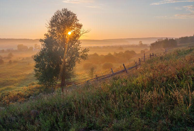 утро, рассвет, деревня, россия, лето, солнце, луг, поле, русский пейзаж, пермский край, шахарово Ёжик в туманеphoto preview