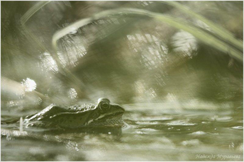 Болото, Лягушка, Седое, Туманное, Утро Принцы перевелисьphoto preview