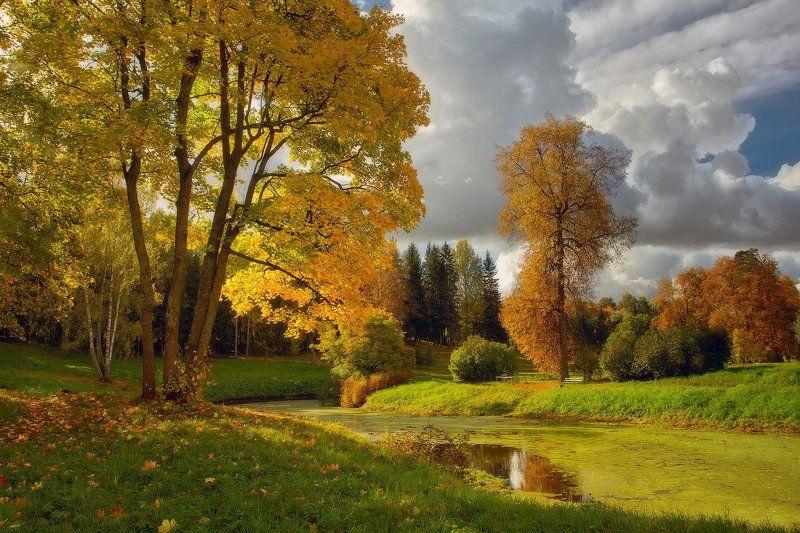landscape, осень, павловск, павловский парк, пейзаж, питер, санкт-петербрг Воспоминания о будущей осени....photo preview