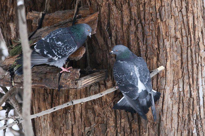 зима, голуби, кормушка, пустая Они надеждою жили.. Но хлебушка так им и не положили..photo preview