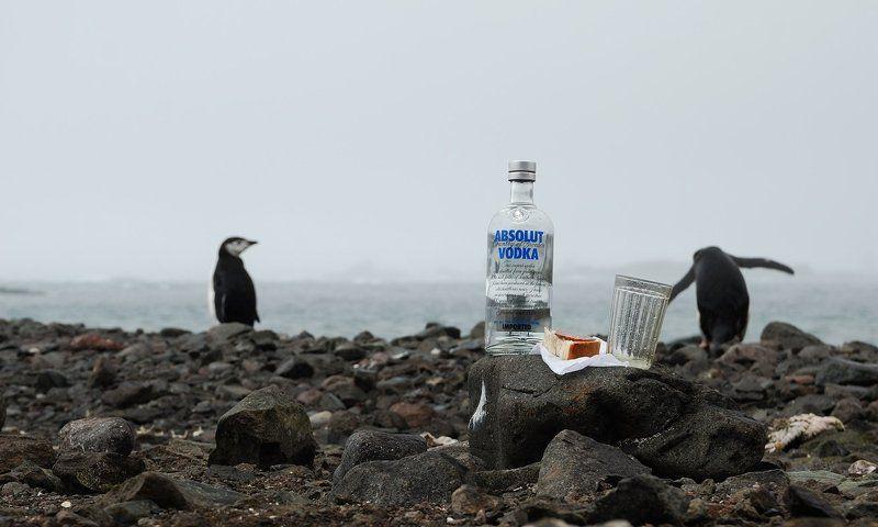 антарктика, пингвины, водка, стакан Напился, веди себя приличноphoto preview