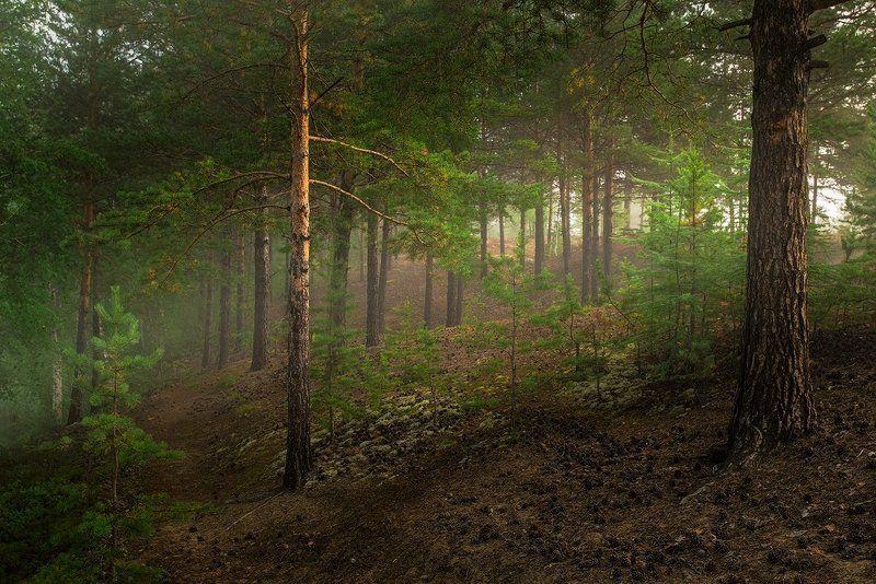 утро, пески, туман, чара, чарские пески, сосны, Утром на Алёнушкеphoto preview