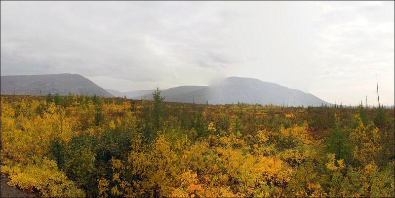 Таймыр,сентябрь,осень Осенний марафон продолжаетсяphoto preview