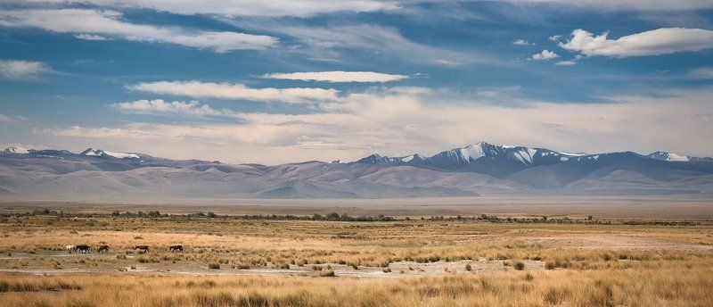 панорама, пейзаж, природа, степь, горы, хребет, большой, широкий, лошади, Алтай, сибирь Чуйская степьphoto preview
