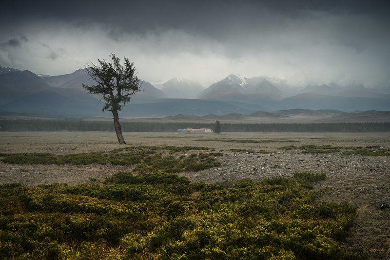 пейзаж, природа, горы, степь, долина, дерево, непогода, туман, облака, хребет, вершины, большой, высокий, красивая, алтай, сибирь Курайphoto preview