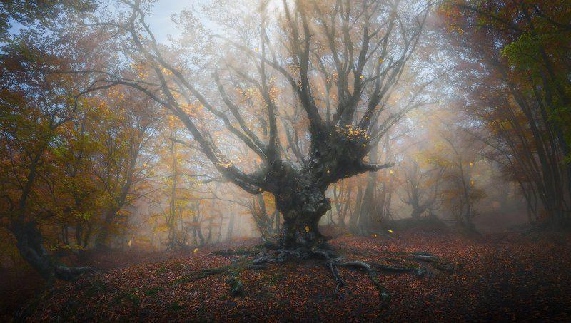 Крым Осень в сказочном лесуphoto preview