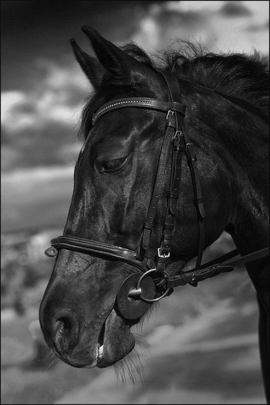 ---= коняшки =---photo preview