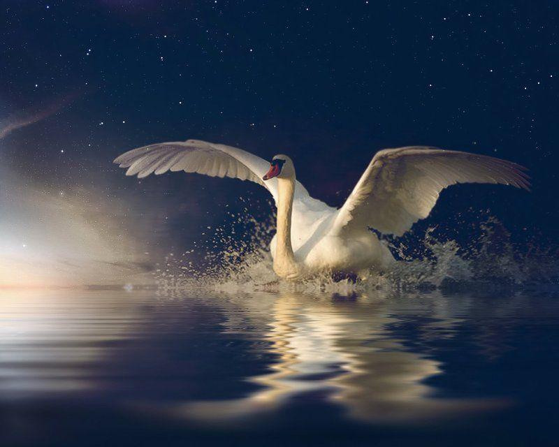 Брызги, Лебедь, Небо, Ночь, Озеро ****photo preview