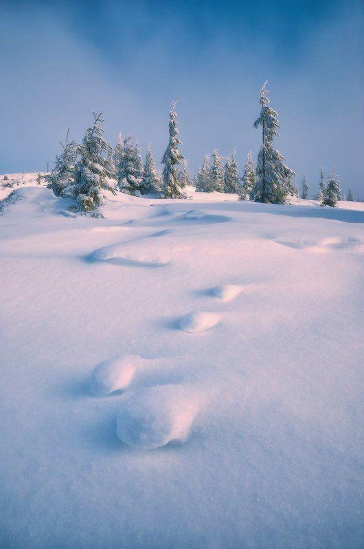 Winter zenphoto preview