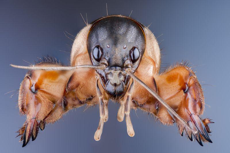 macro insect wildlife Самое трудное  — портретphoto preview