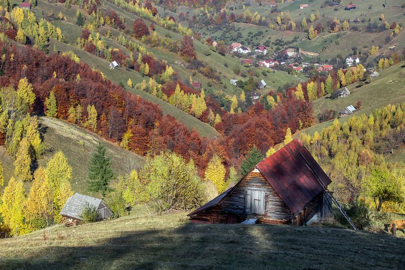 house,autumn,hills,trees,colors,fall House on the hillphoto preview