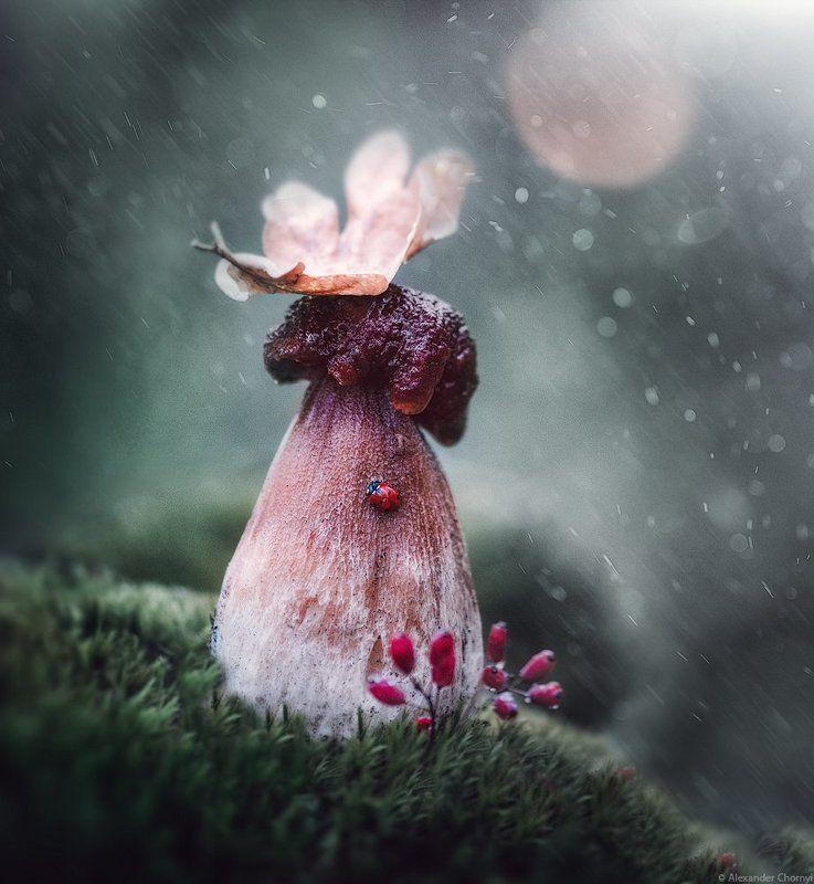 Гриб, Грибной дождь, Дождь, Коростышев, Лето, Украина Грибной дождьphoto preview