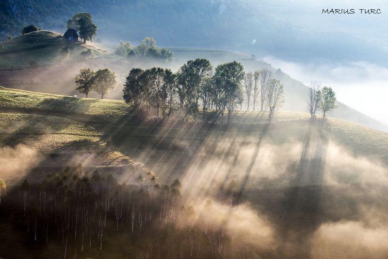 morning,mist,fog,nature,nature,trees,light,hills Mistic morningphoto preview