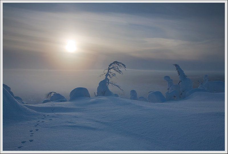 Карелия. Зайчики зимы.photo preview