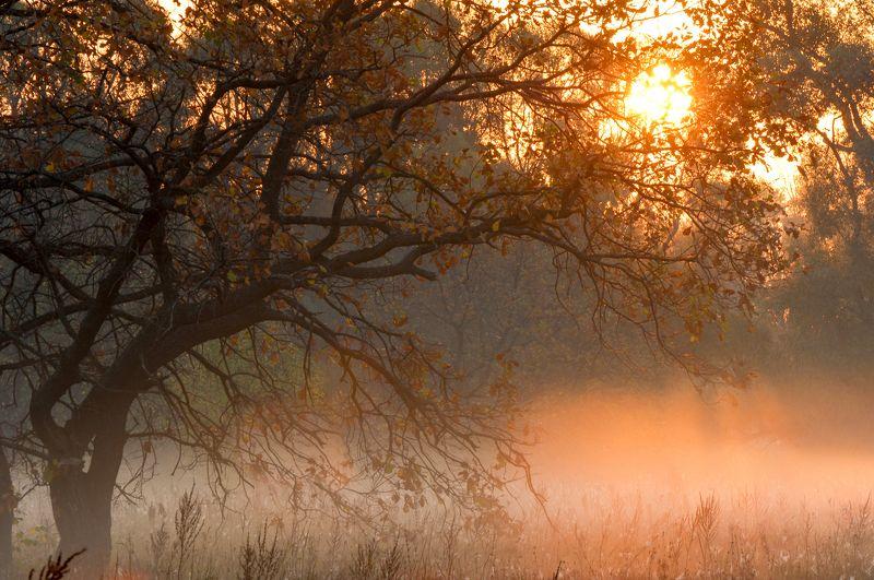 В багрец и в золото одетые леса, В их сенях ветра шум и свежее дыханье,photo preview