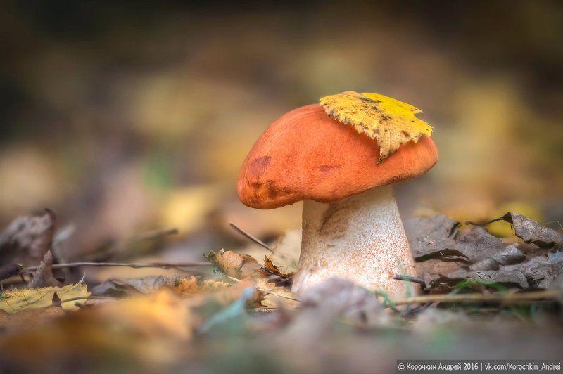 ... время грибов - II ...photo preview