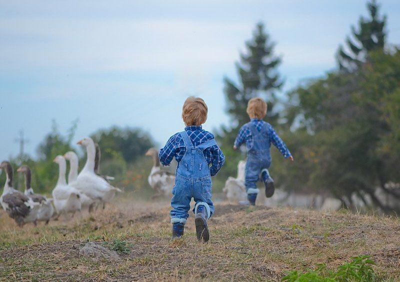Близнецы, Гуси, Дети, Корова, Ферма, Фермеры Чип и Дейл спешат на помощьphoto preview