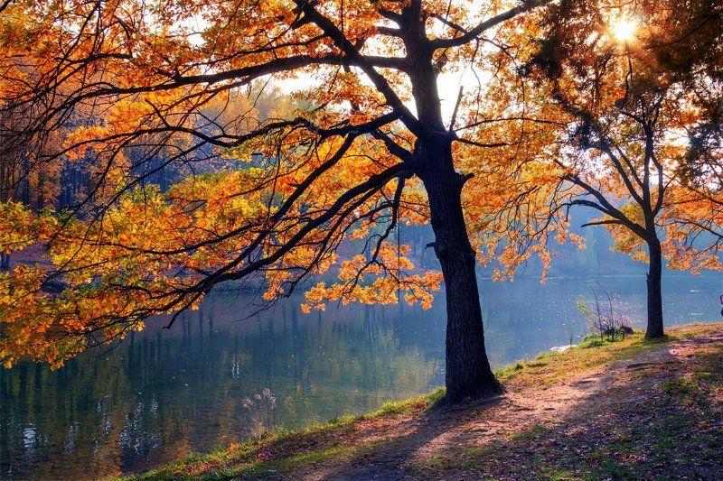 Пылала осень красками закатаphoto preview