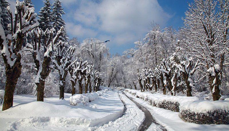 Первый снег ...photo preview