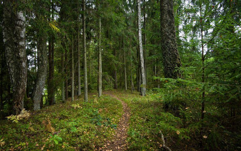 осень пейзаж латвия лес Осень в лесуphoto preview