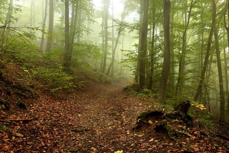 Болгария, Витоша, Осень, София Осень приближает...photo preview