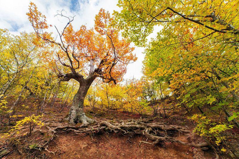 природа, крым, россия, осень, осенний лес, путешествие, travel, nature, crimea Золотой лес в Демерджиphoto preview