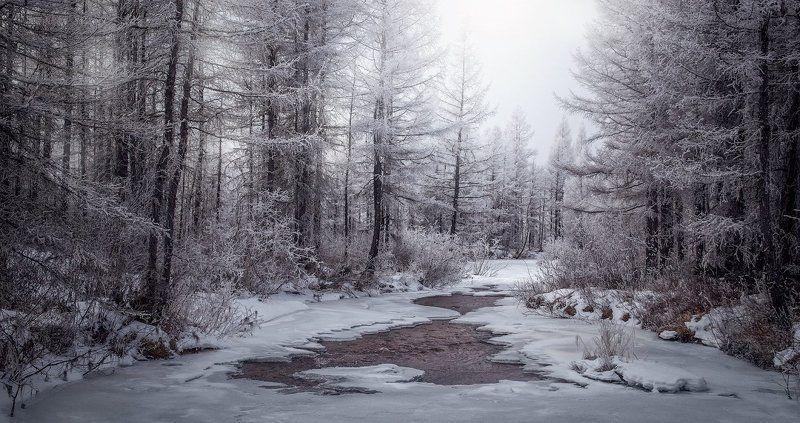река, лес, снег, деревья, сезон, холод Царство зимыphoto preview