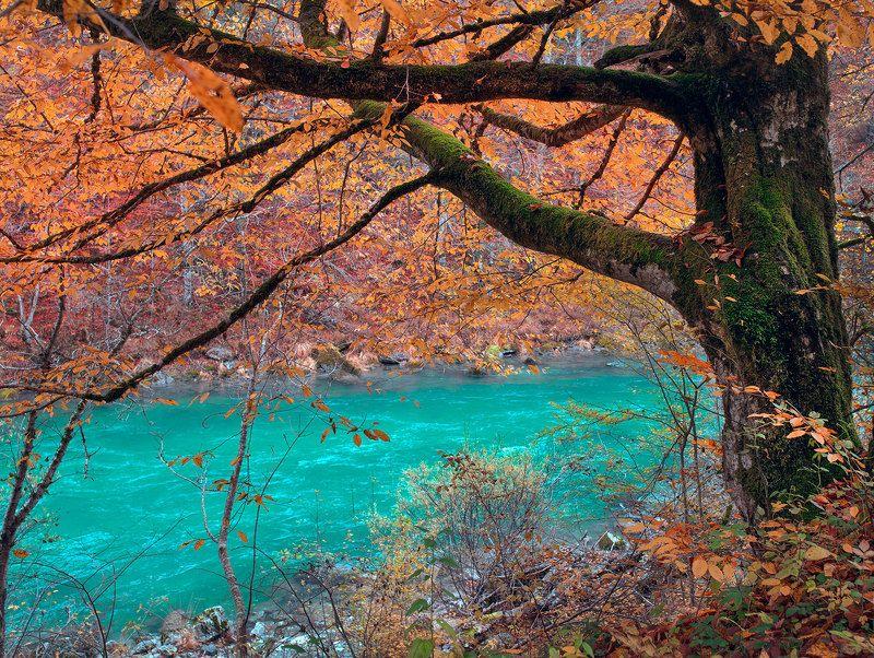 природа, осень, пейзаж, путешествие, черногория, европа, каньон, лес, nature, landscape, river, blue, europe, montenegro Река Тараphoto preview